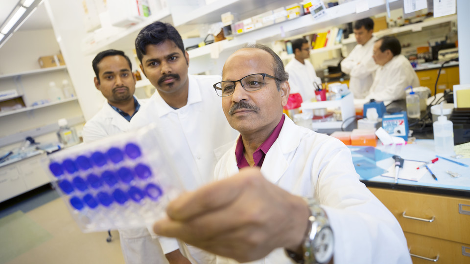 Asit K. Pattnaik looks over samples with Bikash R. Sahoo and Arun S. Annamalai. In the background are teammates Aryamav Pattnaik, Hiep Vu, and Shi-hua Xiang.